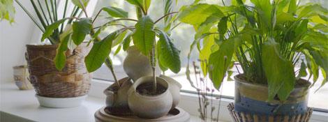 Комнатные растения в детской: Читать далее