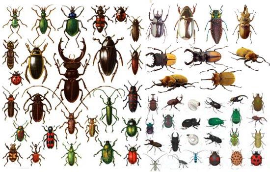 Разнообразный мир жуков